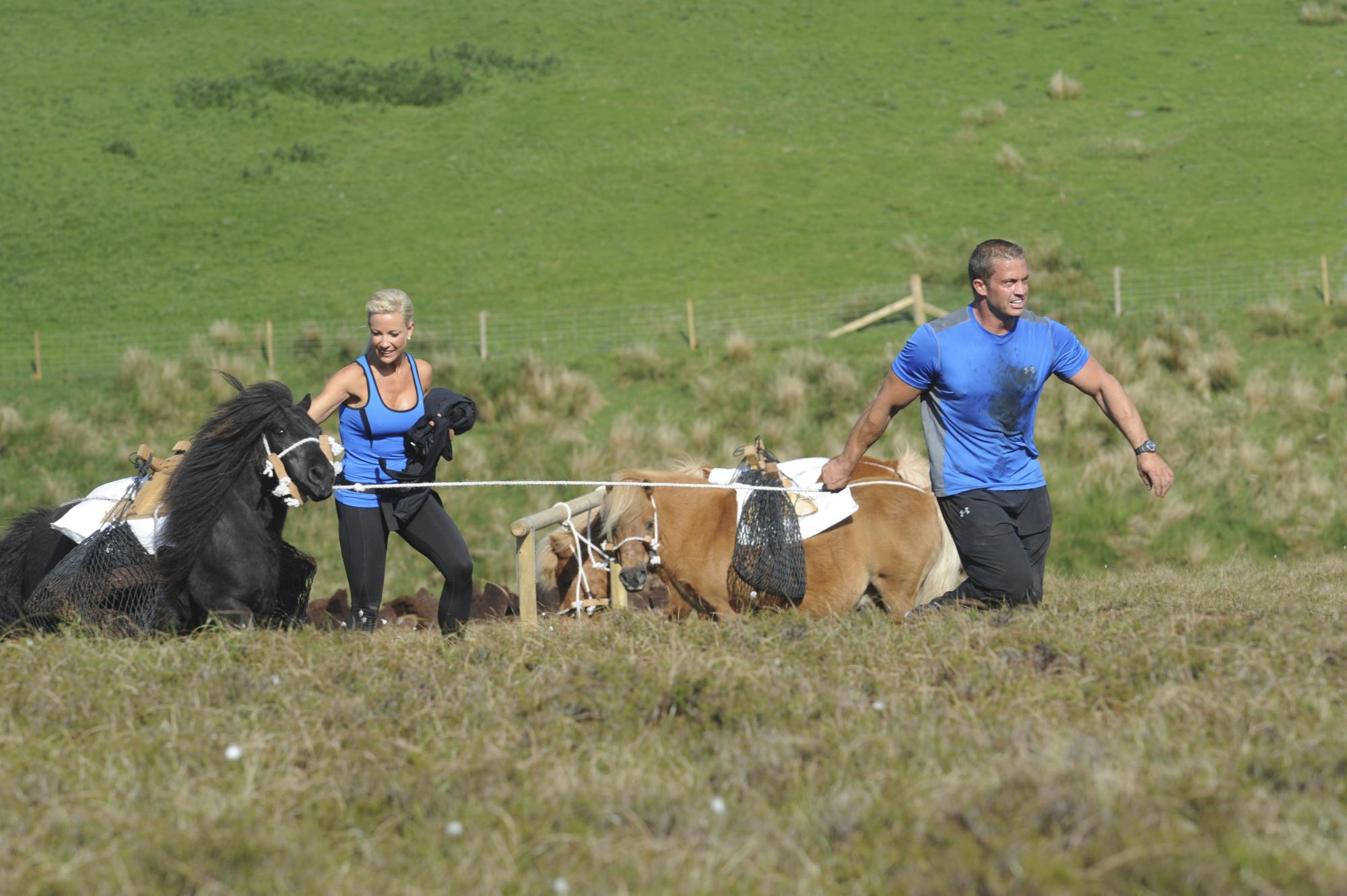 Leading Shetland ponies
