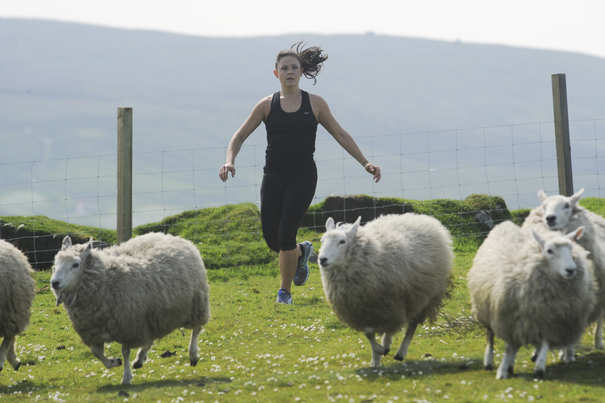 Running after sheep