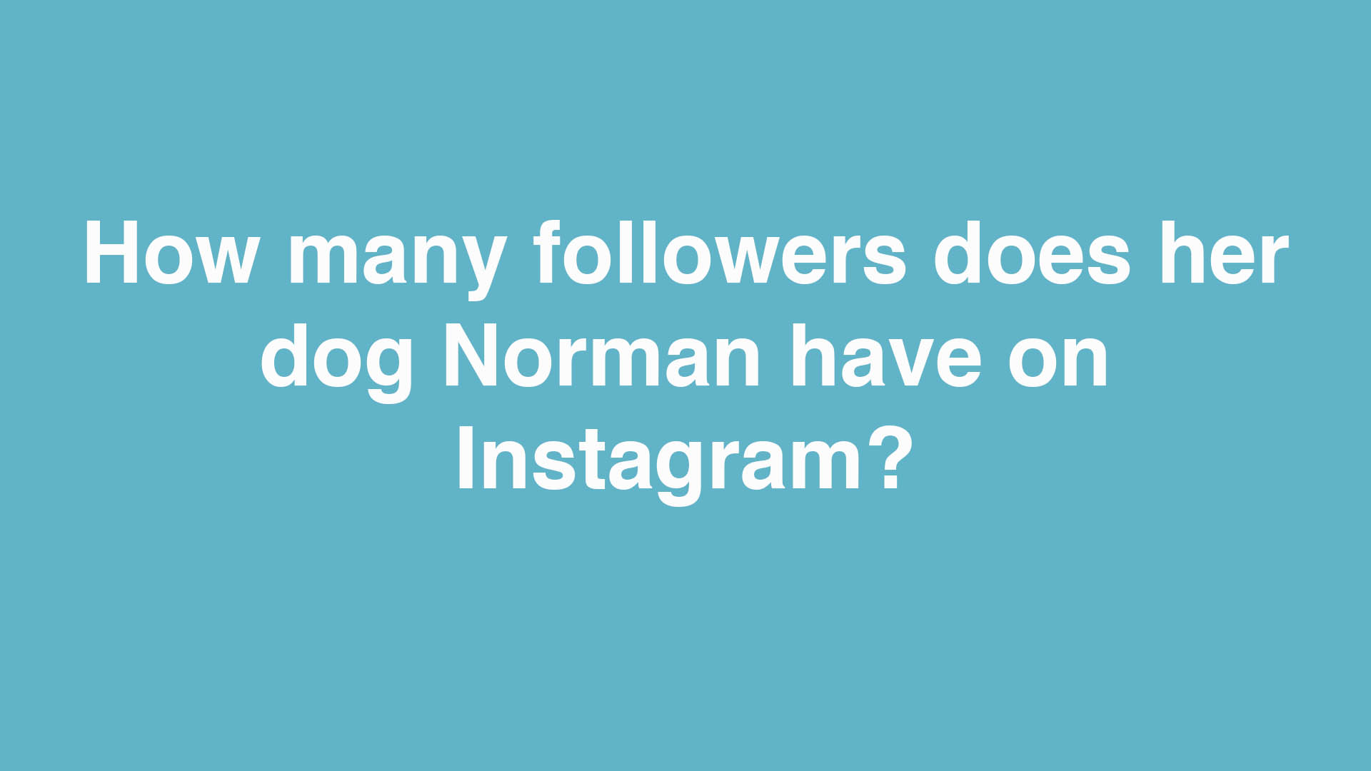 How many followers does her dog Norman have on Instagram?