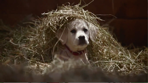 BUDWEISER<br />Lost Dog (2014)