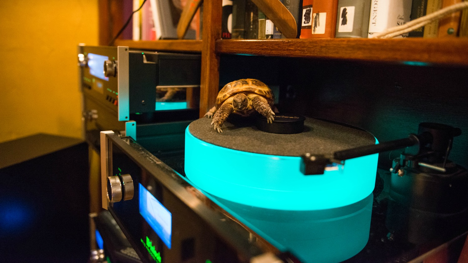 Fact #5: DJ Clyde is very picky about what he's willing to play on his turn tables. This turtle prefers to shell-ebrate good times with instrumental electronica.