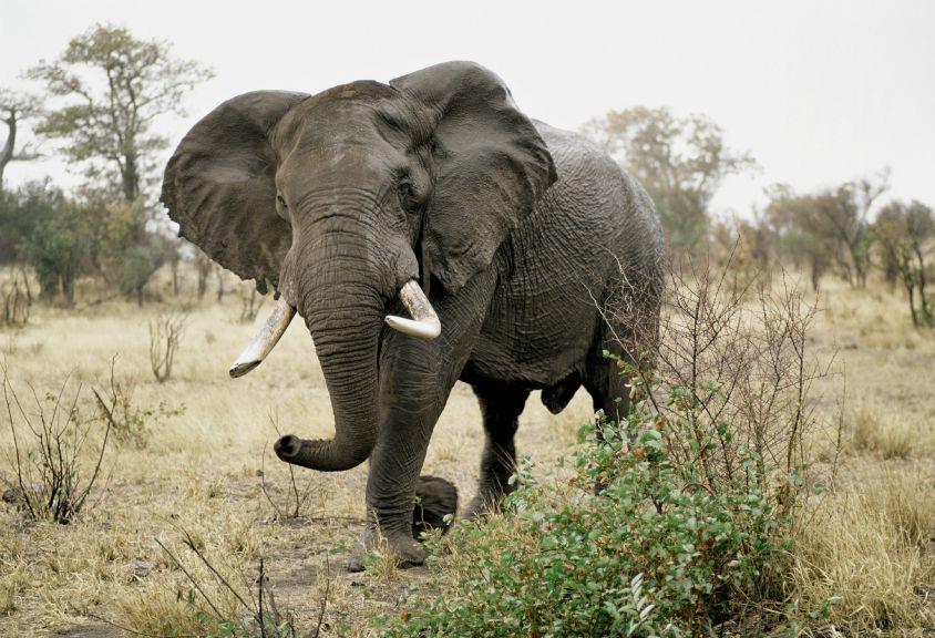 Misunderstood Mammoths