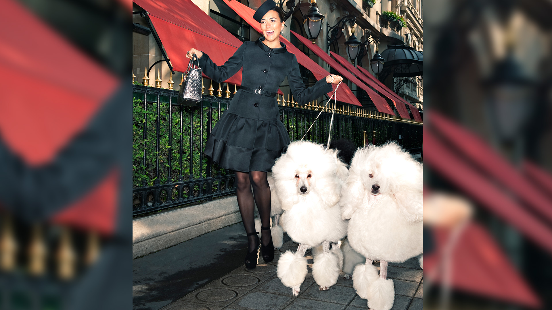 Poodles in Paris