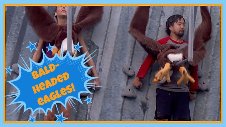 Question: What type of bird hit the Houseguests during this week's HoH competition?