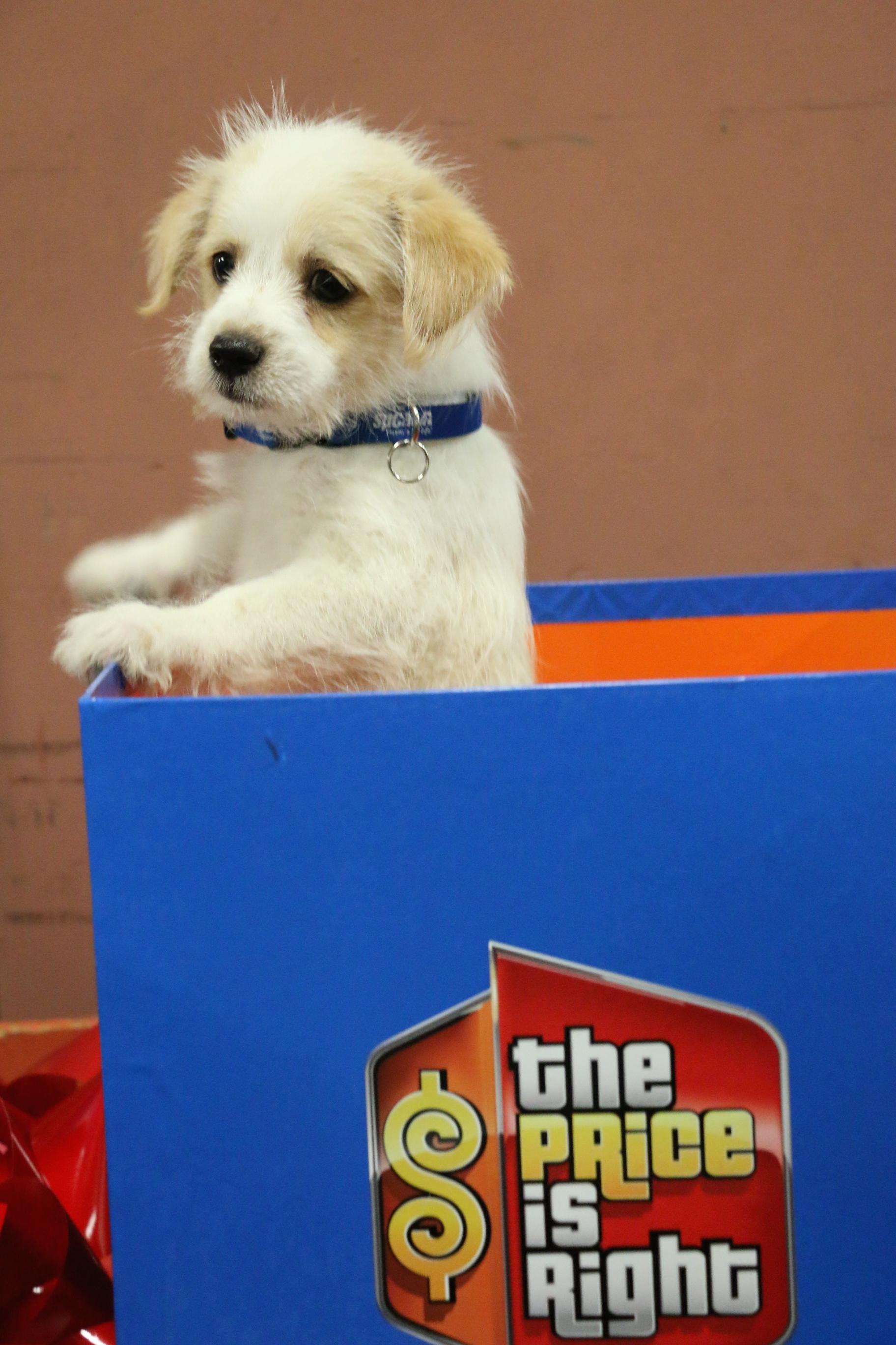 It's a Pup!