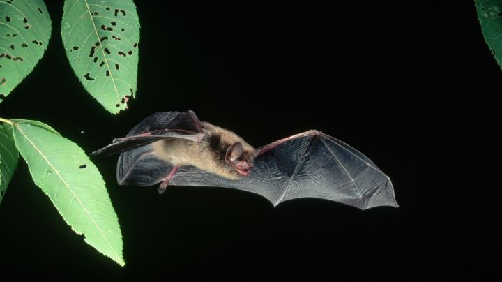 4. Bats are the only mammals that can fly.