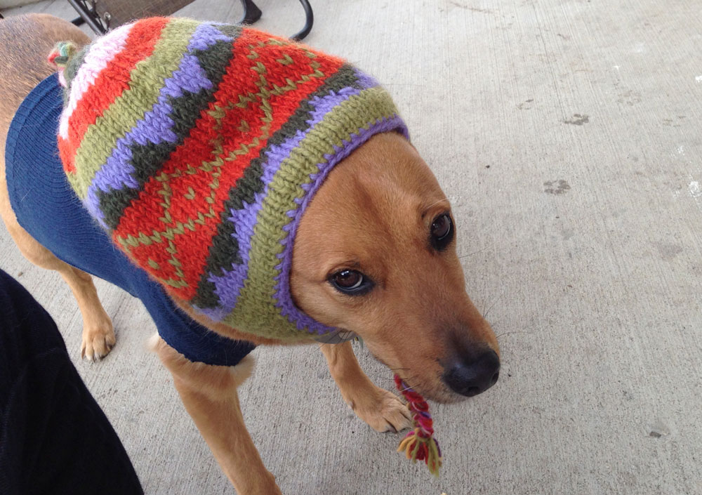 It's not even cold, your owner just wants to see less of you.
