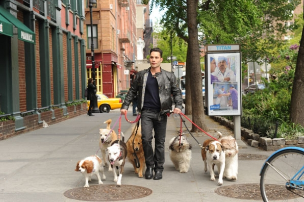 Justin Silver Hosts Dogs in the City