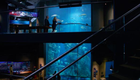 8. This scene was shot inside Charleston's beautiful aquarium after hours.