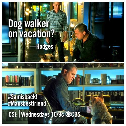 CSI Winner!