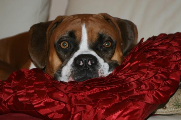 Pup of the Day Winner-Murphy