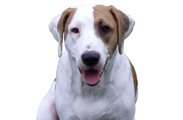 Pup of the Day Winner-Rupert