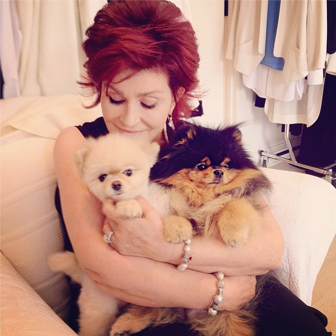 12. Bella and Rocky are super cuddly.