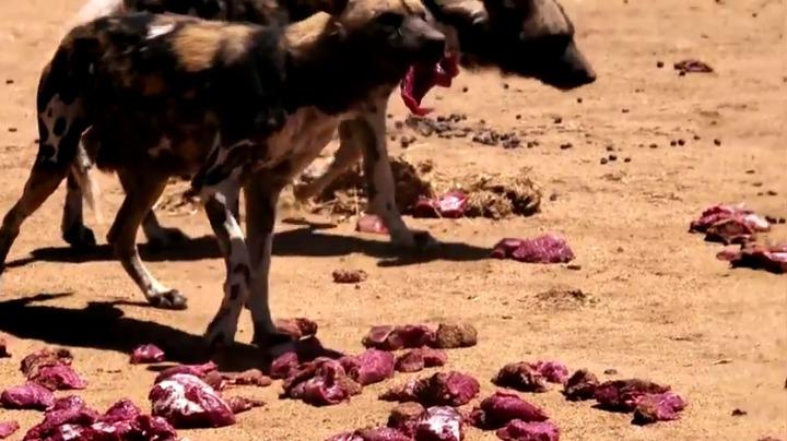 Dangerous dogs on <i>The Amazing Race</i>