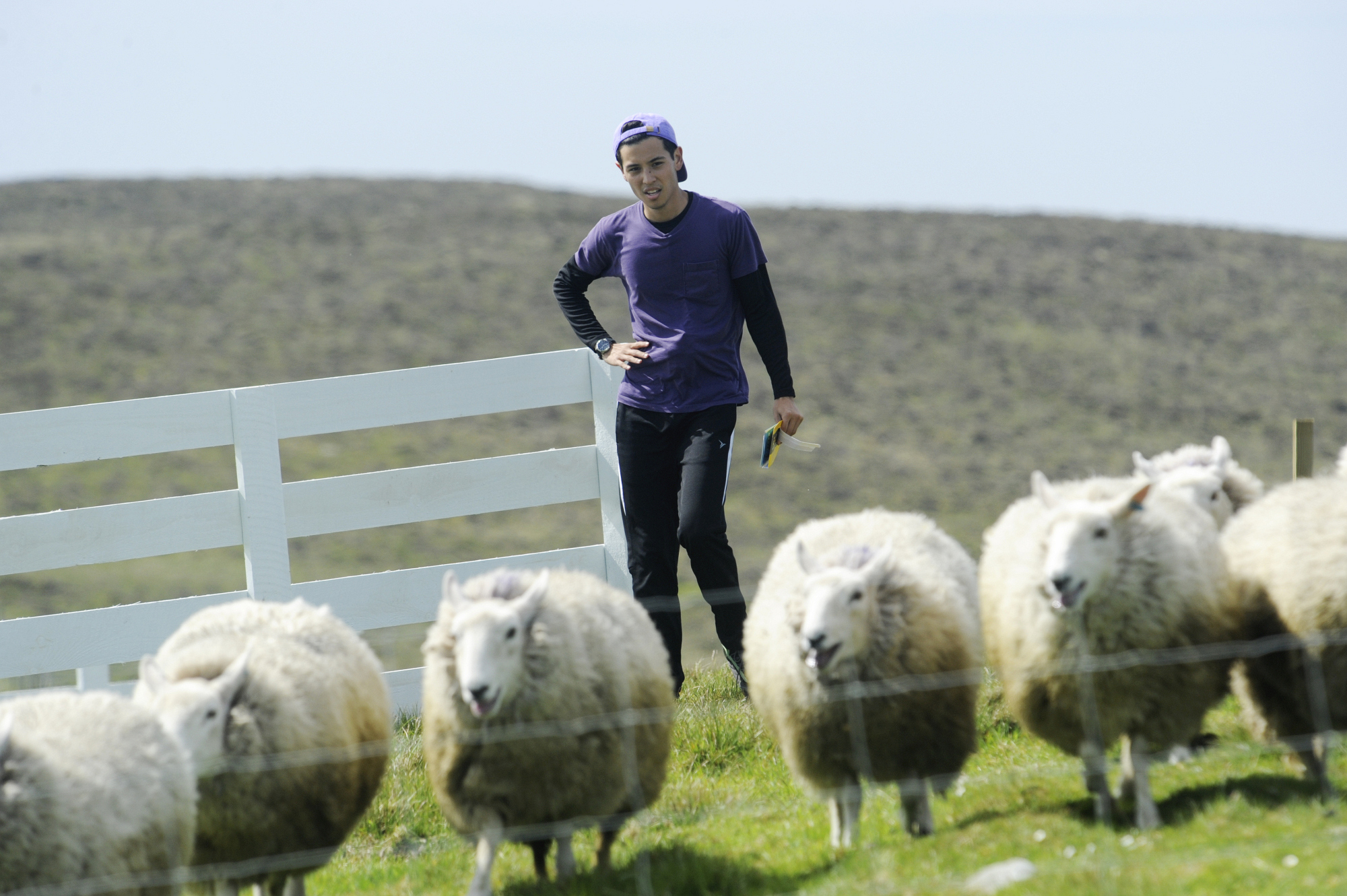 Te Jay works to herd sheep