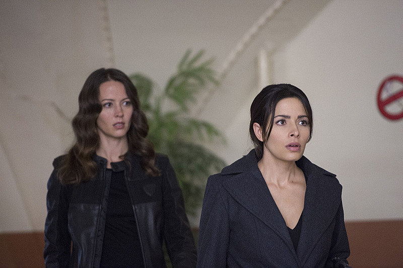 Root and Shaw have a disagreement