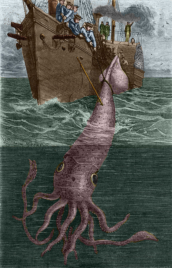 The Colossal Squid