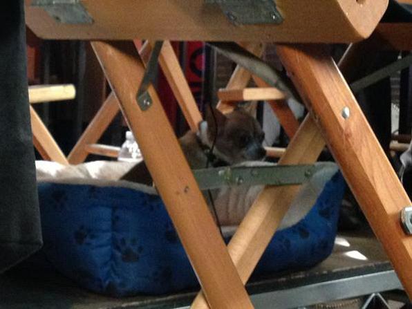 Dog in Hiding