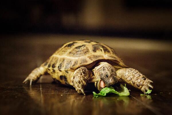 1. He enjoys a light lunch on the go