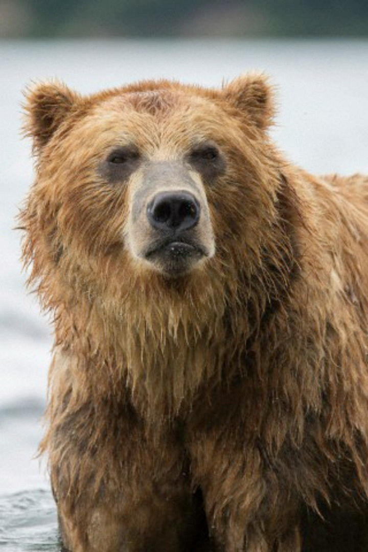 One character douses another in honey in the hopes she'll be eaten by a bear.