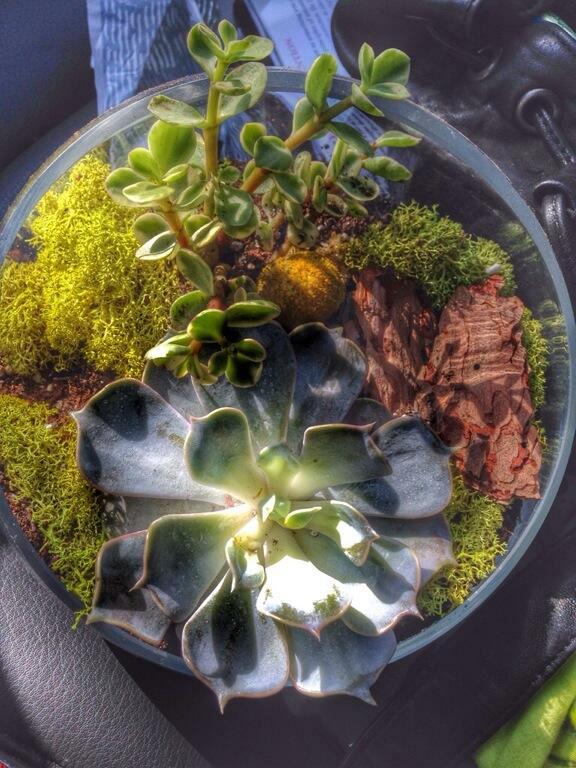 18. Succulents at WildFlora