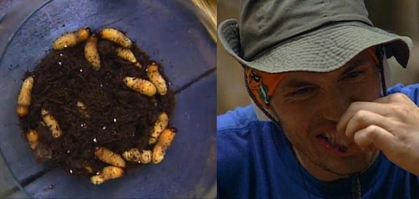 Larva Lunch, Anyone?