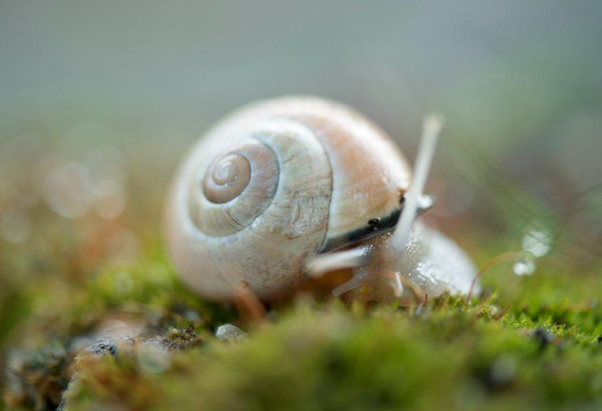 Fatal Freshwater Snails