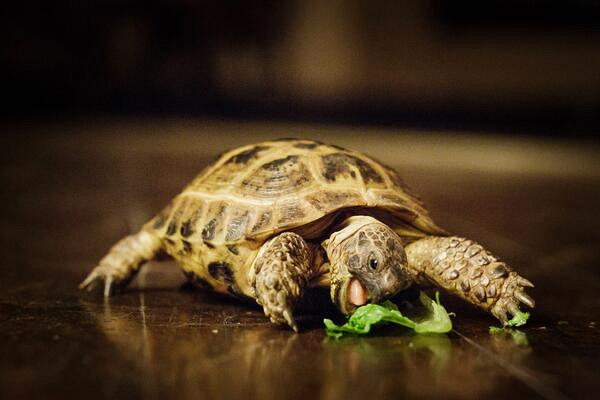 1. No house pets…unless it's a tortoise.