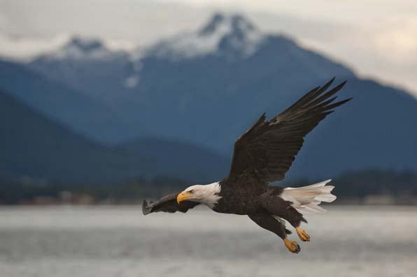 2. The eagle landed