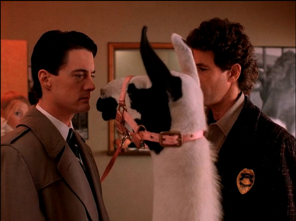 10. The llama that has no time for Cooper's investigation