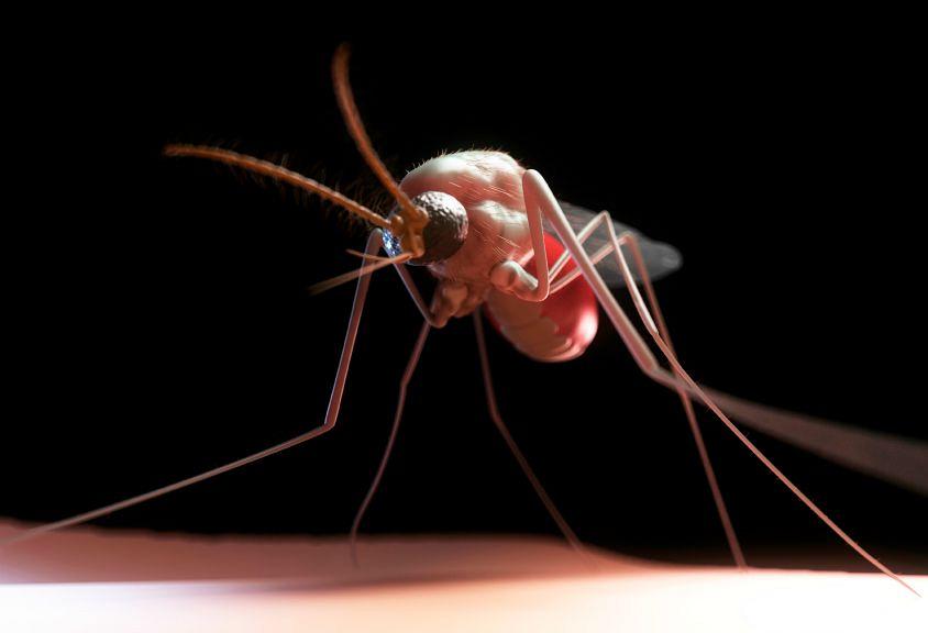 Murderous Mosquitos