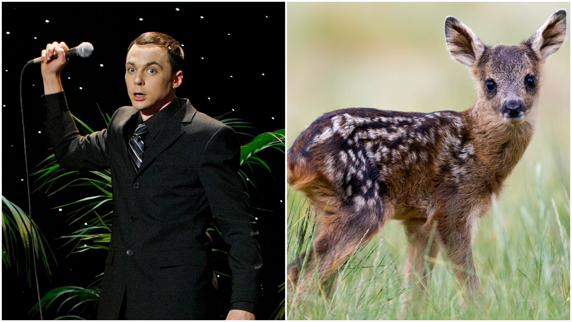 """Sheldon's like a baby deer. You gotta let him come to you."""
