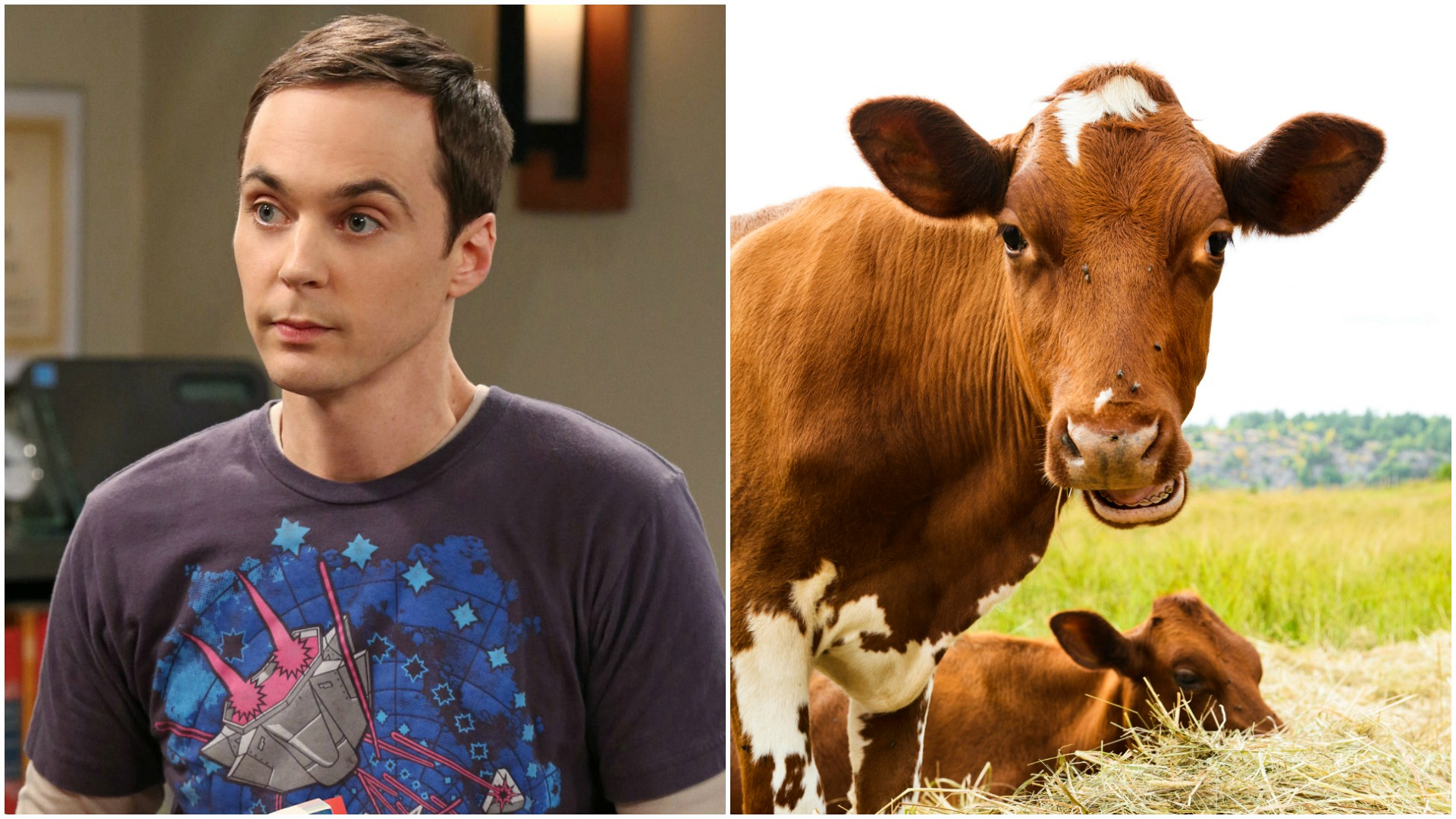 """""""I have the soulful eyes of a cow."""""""