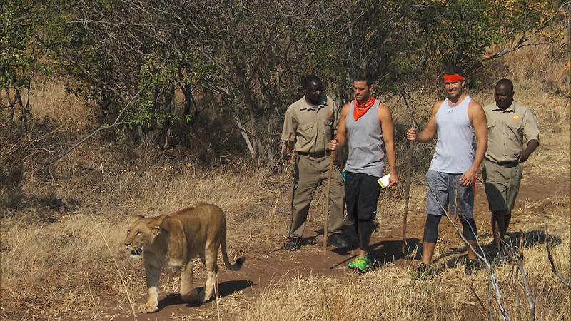 #TeamTexas strolls alongside Africa's giant cats.