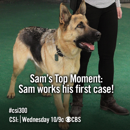 Sam The Dog's Top Moment