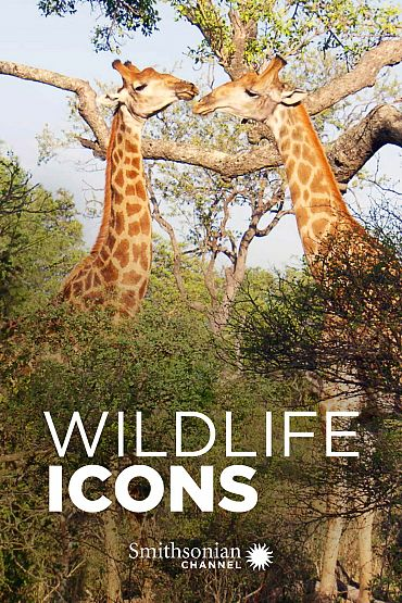 Wildlife Icons