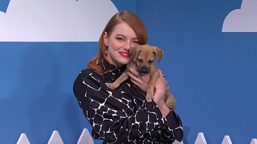 Emma Stone Wants You To Rescue A Puppy From Hurricane Florence