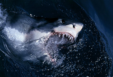 15 Animals Surprisingly More Deadly Than Sharks