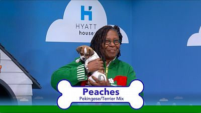 Whoopi Goldberg And Stephen Colbert Have The Perfect Holiday Gift—Puppies!