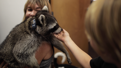 Meet The Great Indoors' Raccoon-And His Canine Buddy!