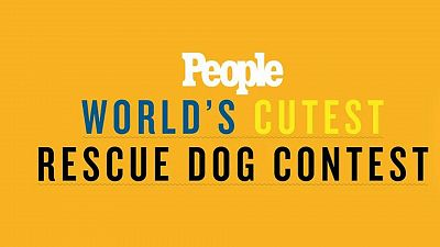 More On People's World's Cutest Rescue Dog Contest