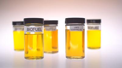 The $100 Million Biofuel Scam