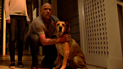 How A Rescue Dog Became A Hollywood Star