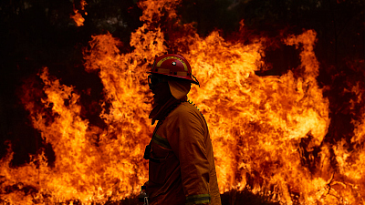 Information On How To Help Victims Of The Bushfires